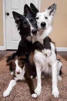 Cute Animals Made Out Of Keyboard Symbols over Cute Animals Christmas below Cute Baby Animals That Are Easy To Draw Cute Funny Animals, Cute Baby Animals, Animals And Pets, Cute Dogs And Puppies, I Love Dogs, Doggies, Cute Animal Pictures, Dog Pictures, Hilarious Pictures