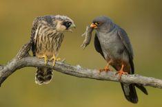 http://i.telegraph.co.uk/multimedia/archive/02649/birds-mouse_2649566k.jpg