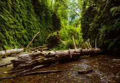 Fern Canyon Humboldt County | Nathan Yan [OC] | [2048x1428]   landscape Nature Photos