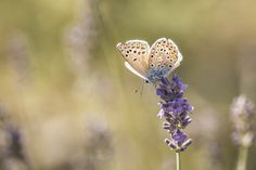 Tips for Photographing Butterflies
