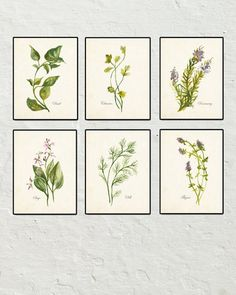 Watercolor Herbs Print Set 2 - Botanical Print - Giclee Canvas Print - 6 Herb Prints - Posters - Kitchen Art - Multiple Sizes Available by BelleMaisonArt on Etsy https://www.etsy.com/listing/239314947/watercolor-herbs-print-set-2-botanical