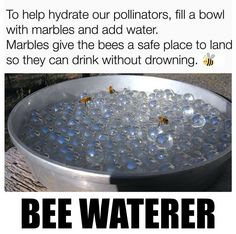 How to save the bees? You can take action today and help make our world a healthier place for bees. Here are things that you can do to save our bees. Le Pollen, Save Our Earth, Save The Bees, Useful Life Hacks, Bee Keeping, Things To Know, Garden Projects, Outdoor Projects, Good To Know