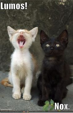 Lumos & Nox...which would be totally AWESOME cat names ;)