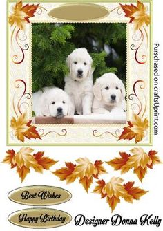 Cute White Puppies Birthday on Craftsuprint designed by Donna Kelly - Adorable Puppies adorn the center of this pretty framed card. autum leaves enhance the lace frame. Sheet includes an approx 7x7 card front, decoupage, and 2 sentiment tags. sentiments read Best Wishes, Happy Birthday  - Now available for download!