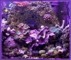 Current USA Orbit Marine Aquarium LED Light 36 to -- More info could be found at the image url. (This is an affiliate link) Purple Love, Purple Hues, All Things Purple, Shades Of Purple, Purple Stuff, Mauve, Led Aquarium Lighting, Aquarium Led, Marine Aquarium