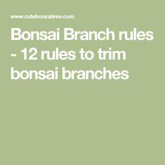Bonsai  Branch rules - 12 rules to trim bonsai branches