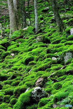 苔 XV1A3476 Japanese Garden Style, Cold Treatment, Nature Spirits, Moss Garden, Forest Garden, Garden Styles, Natural Wonders, Beautiful World, Greenery