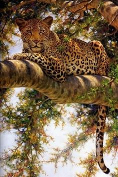 Image IMG 8388 in Wild cats album Nature Animals, Animals And Pets, Cute Animals, Draw Animals, Wild Animals, Beautiful Cats, Animals Beautiful, Big Cats, Cats And Kittens
