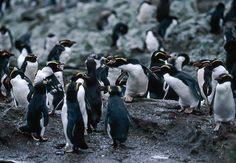 海外旅行世界遺産 スネアーズ諸島 ニュージーランドの絶景写真画像ランキング  ニュージーランド