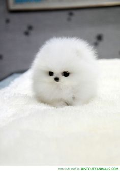it dosent even look like a dog it just look like a big ball of love!