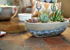 Add a few potted succulents to your patio coffee table or dining table for a simple centerpiece!