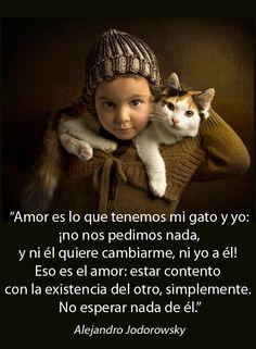 Amor y gatos                                                       …
