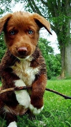 5 Innocent dog Looks, these looks are adorable :)