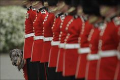 Regimental mascot Conmael the Irish Wolfhound from the 1st Battalion Irish Guards takes part in an inspection