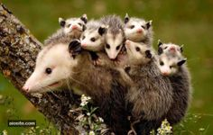 33 Adorable Animals Remind you that MOM is the Best! - AIOsite