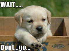 Cuteness overload!!!!