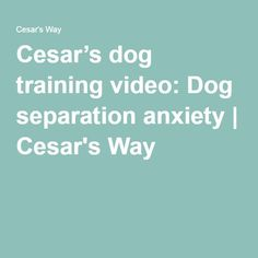 Cesar's dog training video: Dog separation anxiety | Cesar's Way