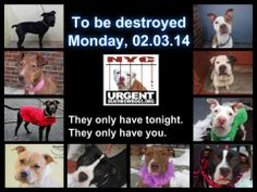 NEW YORK~~LAST DAY OF LIFE FOR THE DOGS IN PICTURE~!!!!!HIGH KILL SHELTER - You may be a dog's last hope! ADOPT/FOSTER/RESCUE  NETWORKING & PLEDGES NEEDED FOR SAFETY~!!!!