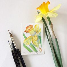 Original ACEO watercolour painting of a daffodil flower by Zoya Makarova