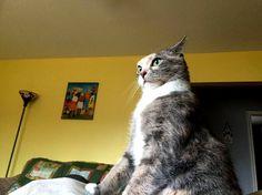 Meowl irl - http://cutecatshq.com/cats/meowl-irl/