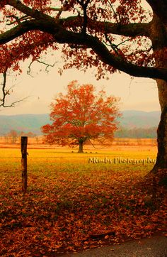Cades Cove. Love thi