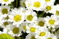 Chamomile extract to help remove make-up effectively.