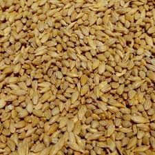 Organic Whole Barley • these seeds can be grown into grass for Barley grass juice •for Barley grass grow for 10 days, then juice the grass • also used for malt in beer brewing malting • slightly bitter taste • organic