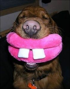 you love my lips? how bout a kiss??