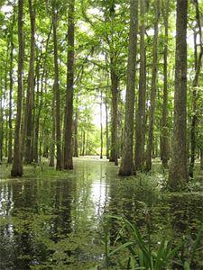 Honey Swamp Cajun Encounters 3731x2488 | #2420634 #honey swamp