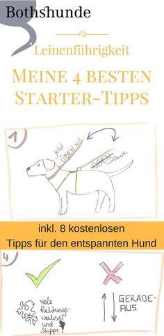 So bringst du deinem Hund bei nicht mehr an der Leine zu ziehen. 4 tolle Trainingstipps für dich und deinen Hund!