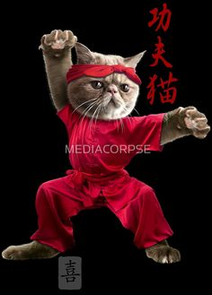 KUNG FU CAT by MEDIACORPSE