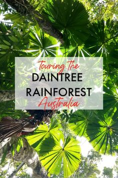 The Daintree Rainforest is the oldest rainforest on the planet and is Far North Queensland. If you are visiting Cairns or Port Douglas or looking for Queensland Itinerary ideas, you must take a look…More Cairns Queensland, Australia Tourism, Coast Australia, Queensland Australia, Australia Trip, Visit Australia, South Australia, Tasmania, Brisbane