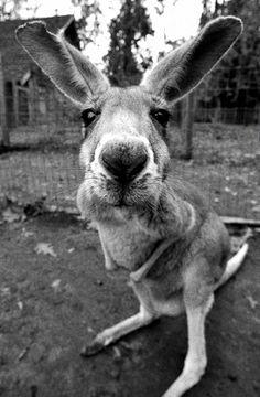 Kangourou!!!