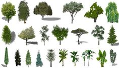 Download and use various 3d sketchup components of plants in your sketchup scenes