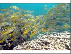Image result for coiba island panama