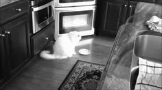 23 merkkiä siitä, että kissasi omistaa sinut | Vivas
