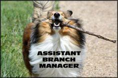 Vacature voor een branch manager (of een takkenwijf)