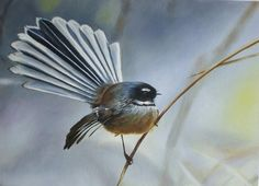 """Saatchi Art is pleased to offer the painting, """"Piwakawaka (New Zealand Fantail),"""" by Victoria Heatherbell. Original Painting: Oil on N/A. Size is 0 H x 0 W x 0 in. New Zealand Tattoo, New Zealand Art, Maori Tattoos, Key Tattoos, Skull Tattoos, Foot Tattoos, Sleeve Tattoos, Nz Art, Kiwiana"""