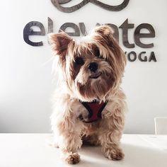 www.elevateyoga.ca | #getbentdoyoga