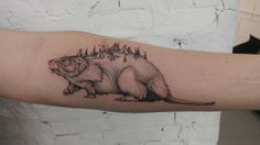 Beaver done by Michael Pecherle at Ink and Water Toronto On