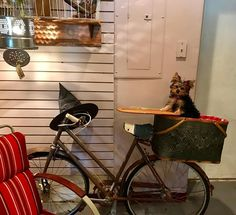 When you are visiting a cute boutique in Oklahoma and they ask Macy Grace to model as Toto in their Wizard of Oz display. #theresnoplacelikehome #wizardofoz #toto #macygrace #yorkiesofinstagram #yorkies #yorkie