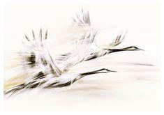 Obrazy na plotnie do salonu Zurawie Seria Shanghai - Nowoczesne obrazy do salonu i sypialni. Ręcznie zdobione. Shanghai, Moose Art, Bird, Abstract, Artwork, Animals, Style, Logo, Blue Prints