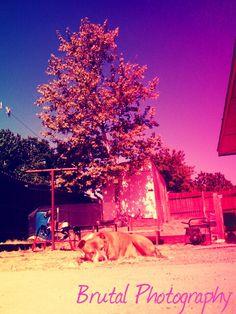 My Peanut Enjoying Summer