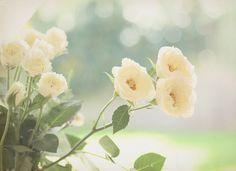 By Dewberry Parfum ? ? ? ? ? ? ?
