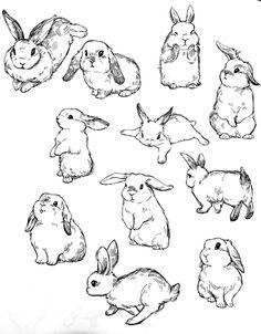 Cute Animal Drawings, Animal Sketches, Cute Drawings, Drawing Sketches, Drawing Ideas, Bunny Tattoos, Rabbit Tattoos, Bunny Drawing, Bunny Art