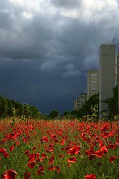 Non tutti i temporali vengono per nuocere.... #rossoaudine By Fabio Franzolini
