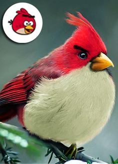 Red Angry Bird!