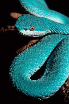"This is so NOT a natural snake color. If it were, it would be on every boot ever sold anywhere. Everyone would be going for the ""teal snake look"" on their feet. Why, IDK. The color's cool..."