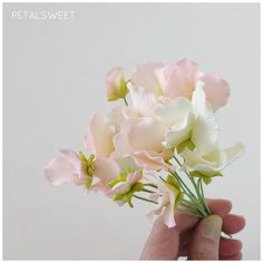 Pink and white sweet peas by Petalsweet.