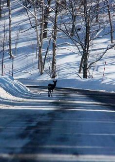 A single deer on a beautiful winter day Winter Magic, Winter Snow, Winter Time, Winter Christmas, Winter Road, Winter Walk, Winter Light, Snow Scenes, Winter Scenes